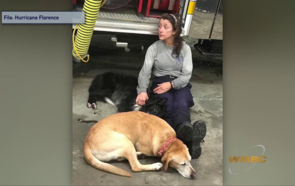 Pets Displaced By Storms